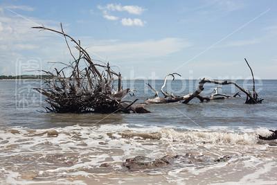 dwight pierre Amelia & Talbot Island 2016 Florida IMG_2548