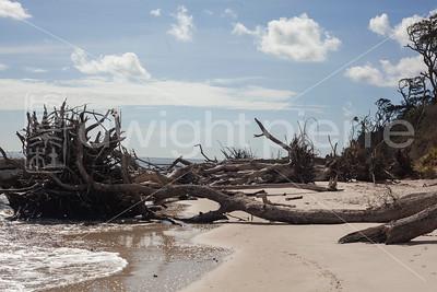 dwight pierre Amelia & Talbot Island 2016 Florida IMG_2538