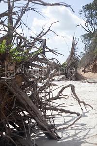 dwight pierre Amelia & Talbot Island 2016 Florida IMG_2566