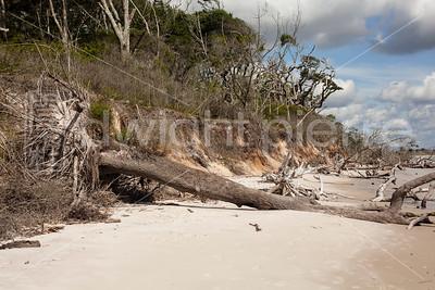 dwight pierre Amelia & Talbot Island 2016 Florida IMG_2550
