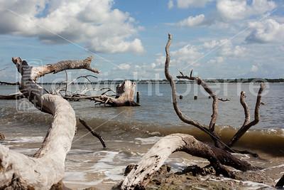 dwight pierre Amelia & Talbot Island 2016 Florida IMG_2543