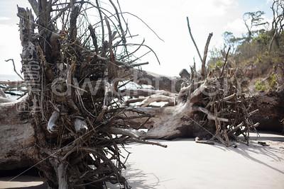 dwight pierre Amelia & Talbot Island 2016 Florida IMG_2529