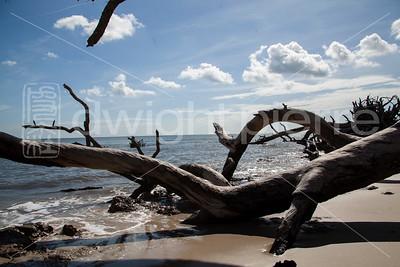 dwight pierre Amelia & Talbot Island 2016 Florida IMG_2487