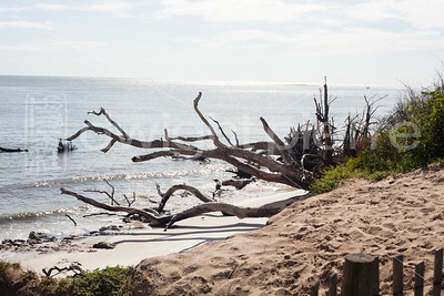 dwight pierre Amelia & Talbot Island 2016 Florida IMG_2446