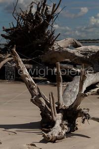 dwight pierre Amelia & Talbot Island 2016 Florida IMG_2512