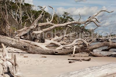 dwight pierre Amelia & Talbot Island 2016 Florida IMG_2509