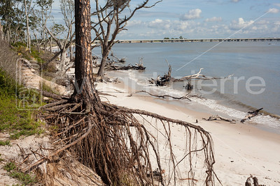 dwight pierre Amelia & Talbot Island 2016 Florida IMG_2448