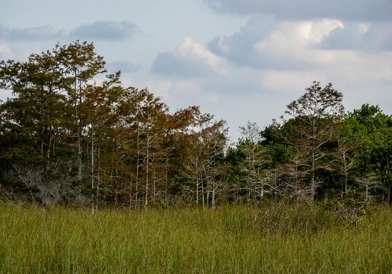 In Florida Everglades -- Shark Valley