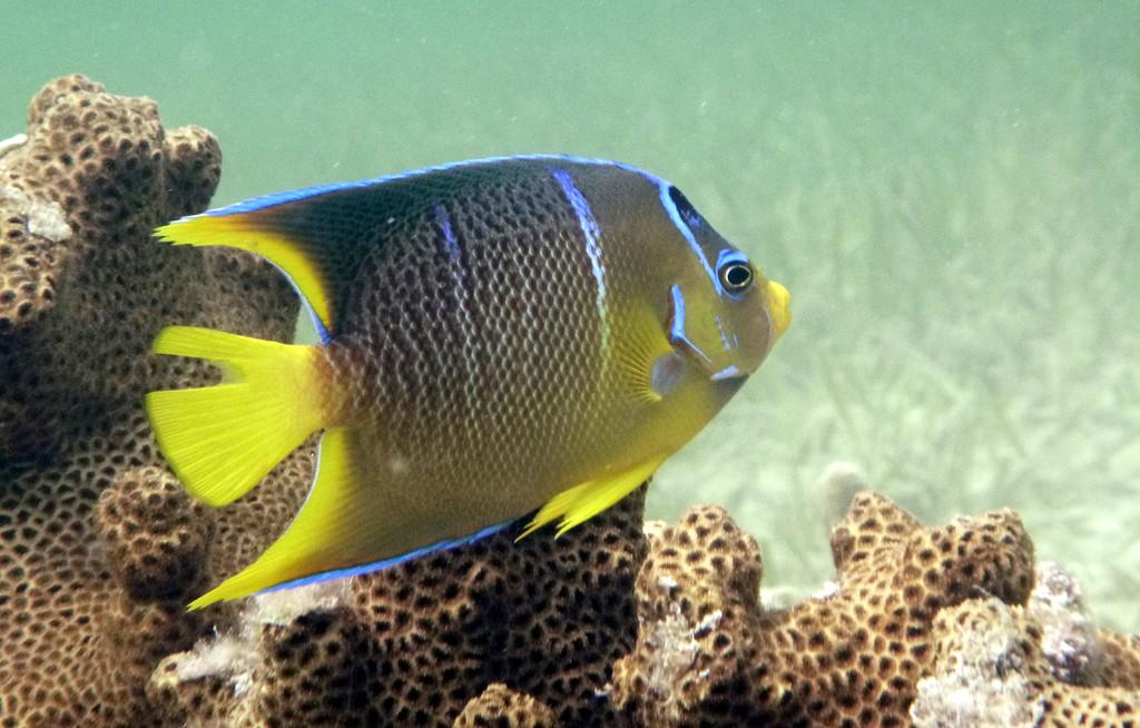 Snorkeling with Honest Eco Tours in Key West