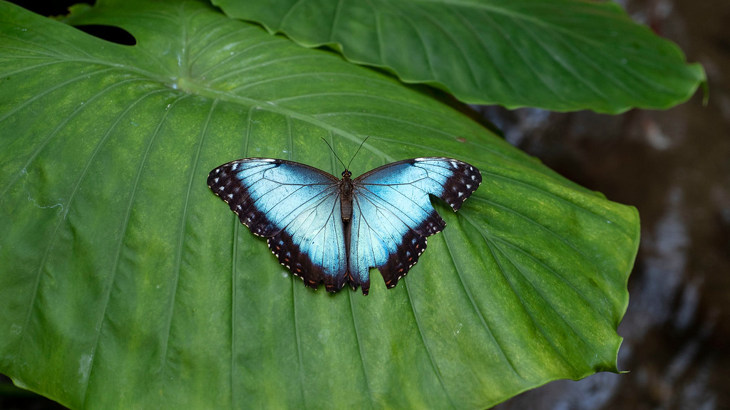 Key West Butterfly Conservatory - Things to do in Key West