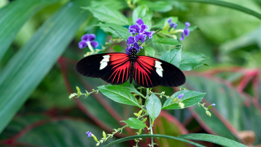 Niagara Falls Butterfly Conservatory in the winter