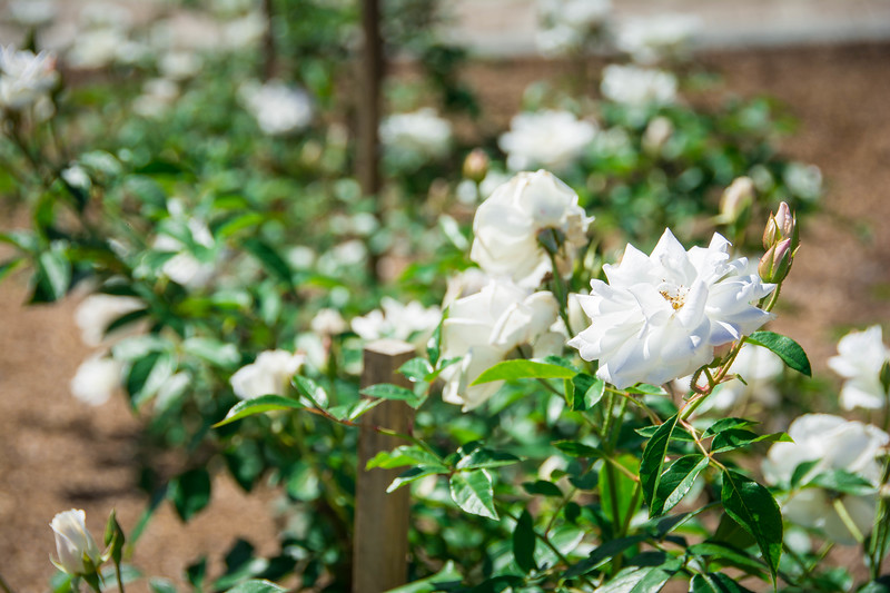 rose garden orlando