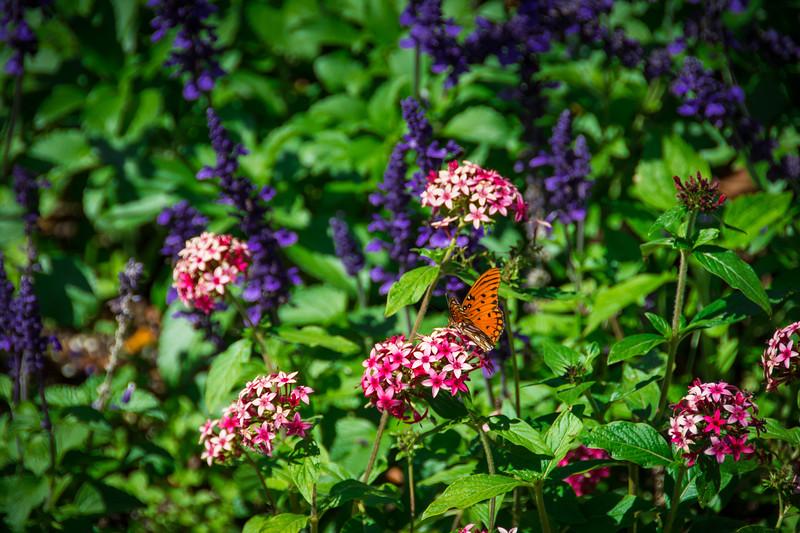butterfly garden leu gardens