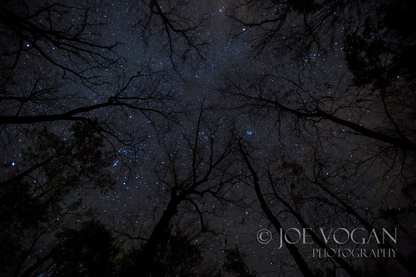 Night Sky at Manatee Springs State  Park, near Chiefland, Florida
