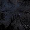 Night Sky at Manatee Springs State  Park, near Chiefland, Florida