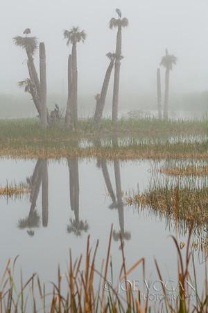 Viera Wetlands, Flagler County, Florida