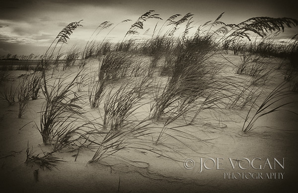 Sea Oats, Gulf Island National Seashore, Pensacola