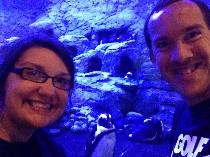 gatlinburg aquarium of the smokies