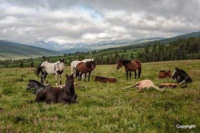 Horses_D704656