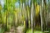 treetrunks4_D703099