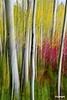 treetrunks3_D703076