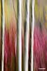 Treetrunks1_D703066