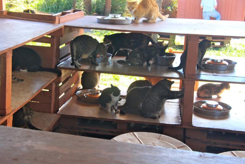 Lana'i Animal Rescue Center