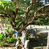 shoe tree