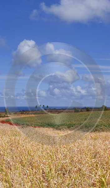 Waialua Sugar Cane Plantation Noth Shore Hawaii Ocean Fine Art Photography Prints For Sale - 010664 - 28-10-2011 - 4173x7092 Pixel
