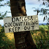 Coconut Falling Warning Sign, Kauai, Hawaii