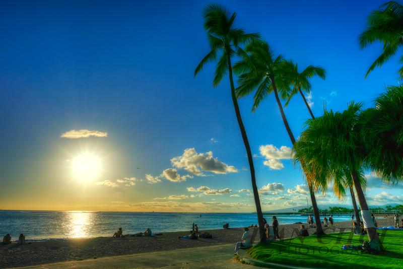 Palm Tree Salutes