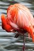 Flamingo_D7K0699