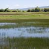 Bear Lake Wetlands, Idaho