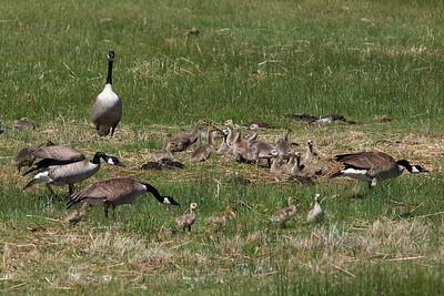 Bear Lake Idaho Wetlands