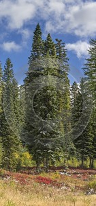 Mccall Brundage Mountain Ski Resort Idaho Snow Forest Stock Image Senic Art Printing - 022291 - 08-10-2017 - 7845x16693 Pixel
