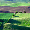 Morning Views of the Palouse Region from Steptoe Butte, Washington State
