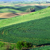 Views of the Palouse Region from Steptoe Butte, Washington State