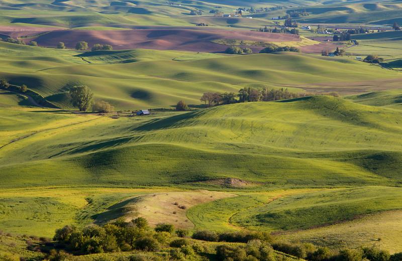 A rural farm scene taken from Steptoe Butte, the Palouse - Washington State