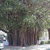 Key West-166