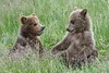 Cubs_D711996