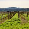 Frog's Leap Winery, Napa County