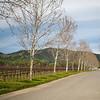 Brassfield Winery, Lake County
