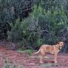 The Dog Jasper