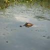 Pintail Wildlife Drive