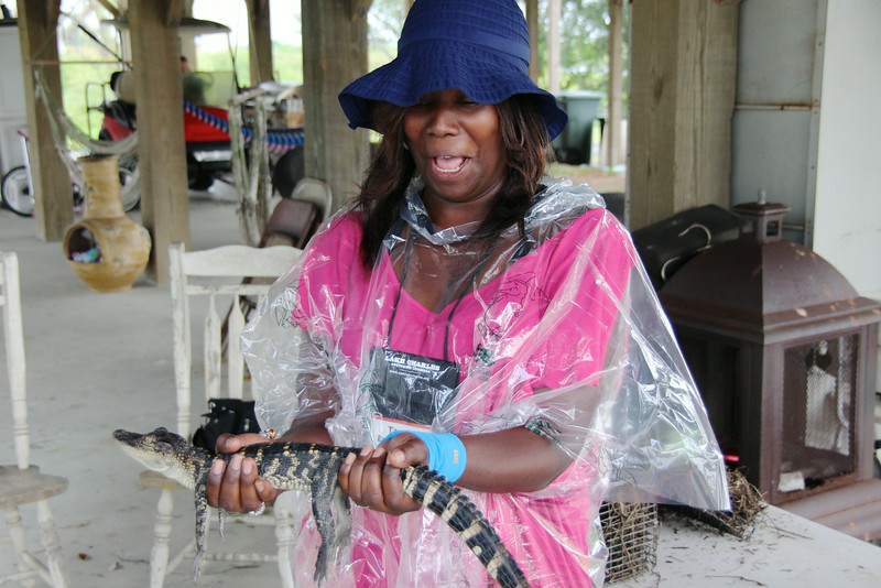 Airboats & Alligators
