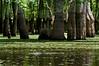 Honey Island Swamp, July 2012