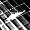 Roach Guitar