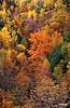 Fall_0228