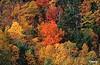 Fall_0214