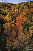 Fall_0227